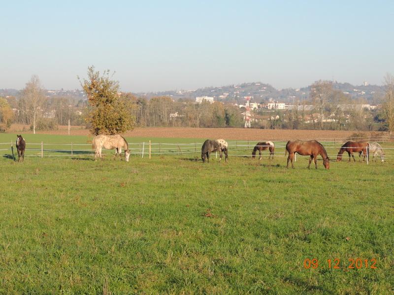 Mes chevaux, un mélange d'un peu tout le monde! - Page 3 01010
