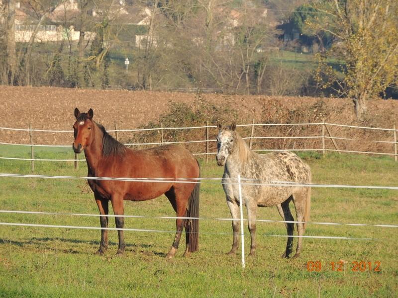 Mes chevaux, un mélange d'un peu tout le monde! - Page 3 01610
