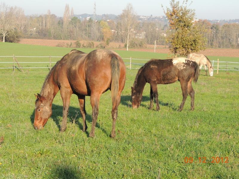 Mes chevaux, un mélange d'un peu tout le monde! - Page 3 02110