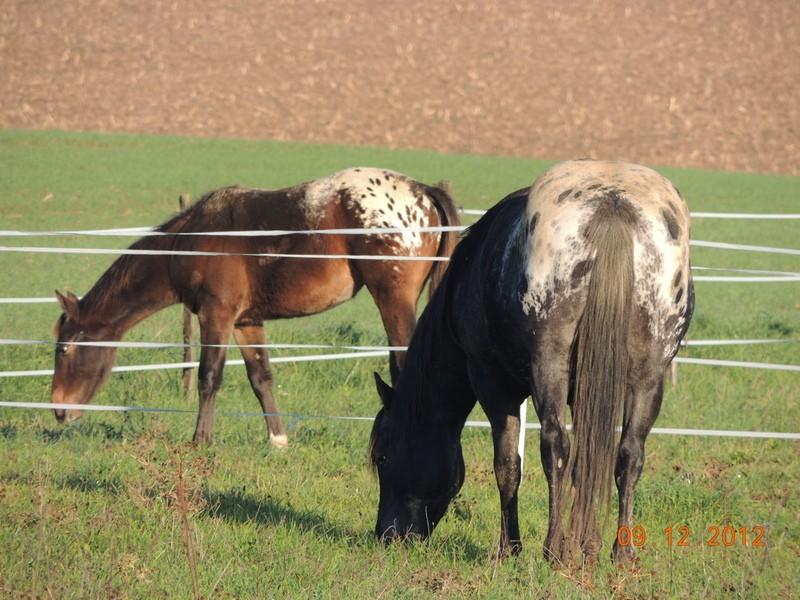 Mes chevaux, un mélange d'un peu tout le monde! - Page 3 02210