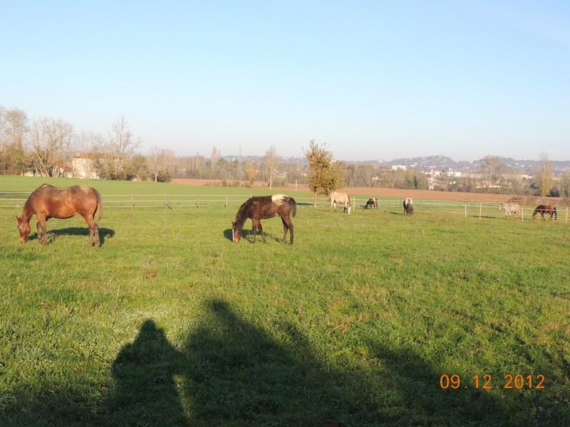 Mes chevaux, un mélange d'un peu tout le monde! - Page 3 02310