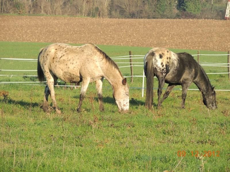 Mes chevaux, un mélange d'un peu tout le monde! - Page 3 02610
