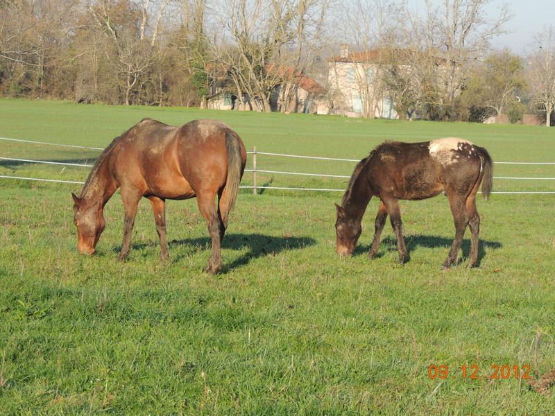 Mes chevaux, un mélange d'un peu tout le monde! - Page 3 02710