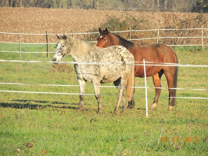 Mes chevaux, un mélange d'un peu tout le monde! - Page 3 02810