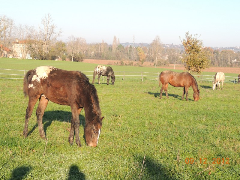 Mes chevaux, un mélange d'un peu tout le monde! - Page 3 03610