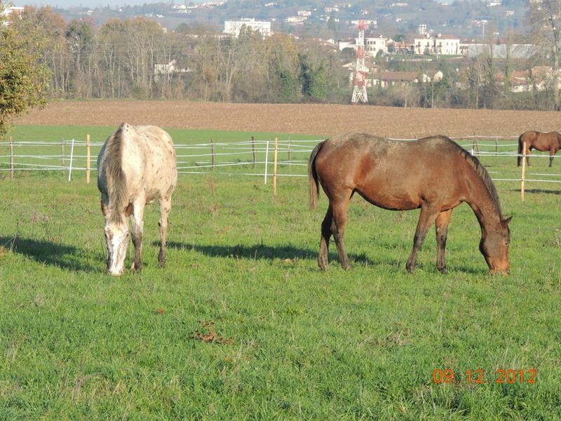 Mes chevaux, un mélange d'un peu tout le monde! - Page 3 03810