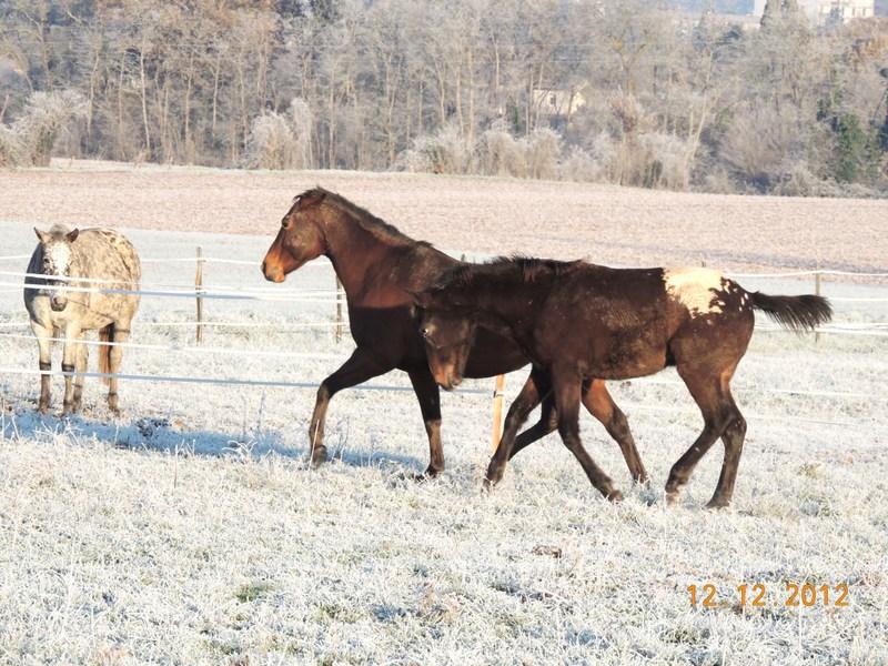 Mes chevaux, un mélange d'un peu tout le monde! - Page 3 05110