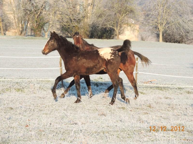 Mes chevaux, un mélange d'un peu tout le monde! - Page 3 05210