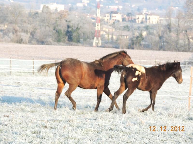 Mes chevaux, un mélange d'un peu tout le monde! - Page 3 06110