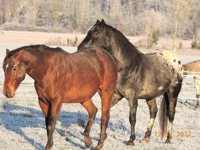 Mes chevaux, un mélange d'un peu tout le monde! - Page 3 06710