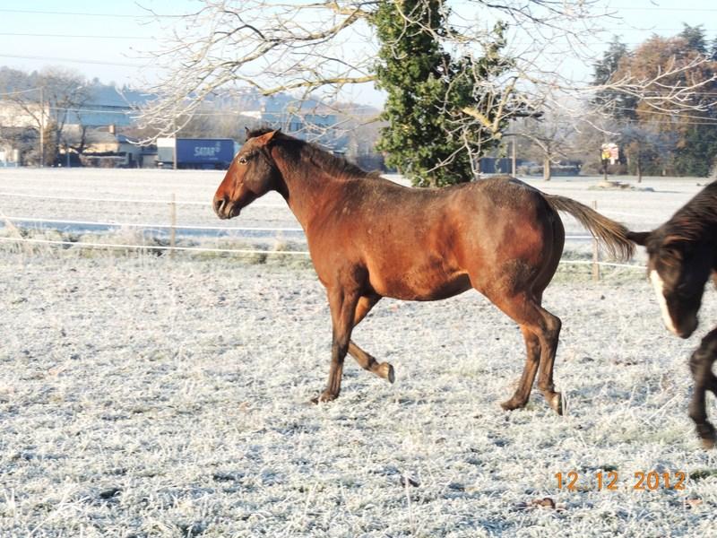 Mes chevaux, un mélange d'un peu tout le monde! - Page 3 07410