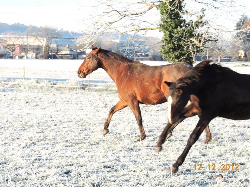 Mes chevaux, un mélange d'un peu tout le monde! - Page 3 07510