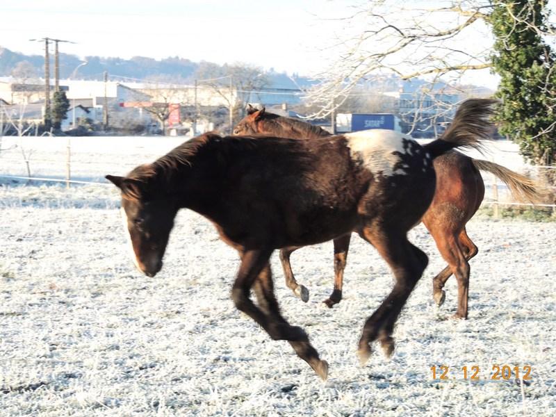 Mes chevaux, un mélange d'un peu tout le monde! - Page 3 07710