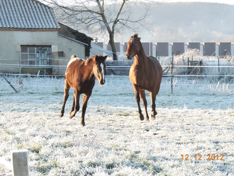 Mes chevaux, un mélange d'un peu tout le monde! - Page 3 07810