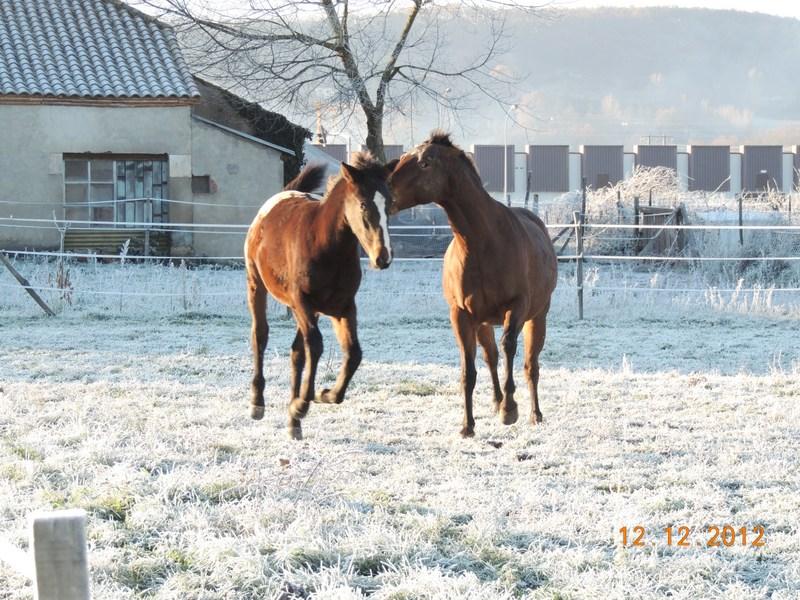 Mes chevaux, un mélange d'un peu tout le monde! - Page 3 07910