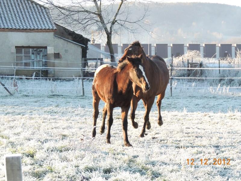 Mes chevaux, un mélange d'un peu tout le monde! - Page 3 08110