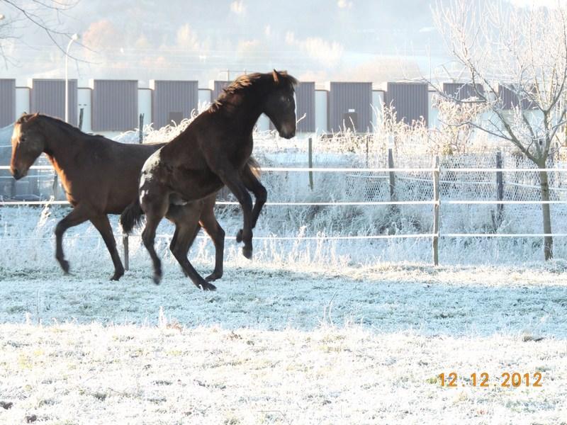 Mes chevaux, un mélange d'un peu tout le monde! - Page 3 11710