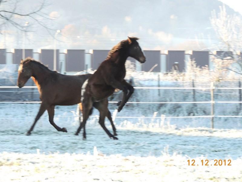 Mes chevaux, un mélange d'un peu tout le monde! - Page 3 11810