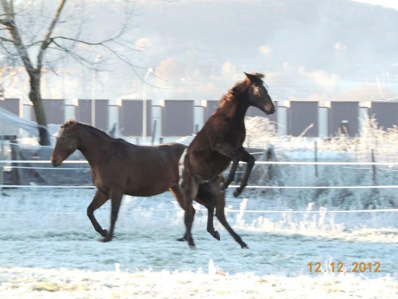Mes chevaux, un mélange d'un peu tout le monde! - Page 3 11910