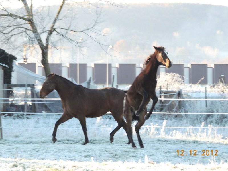 Mes chevaux, un mélange d'un peu tout le monde! - Page 3 12011