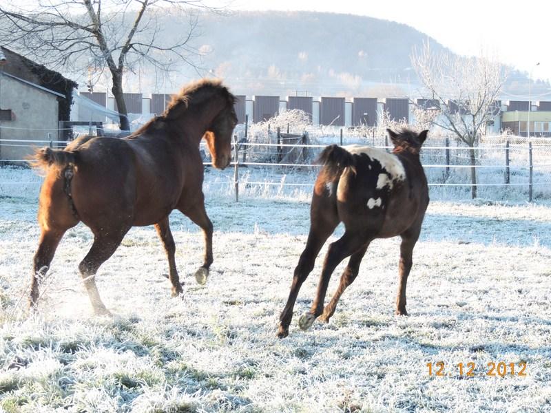 Mes chevaux, un mélange d'un peu tout le monde! - Page 3 12110