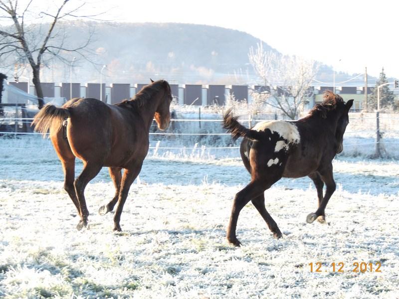 Mes chevaux, un mélange d'un peu tout le monde! - Page 3 12310