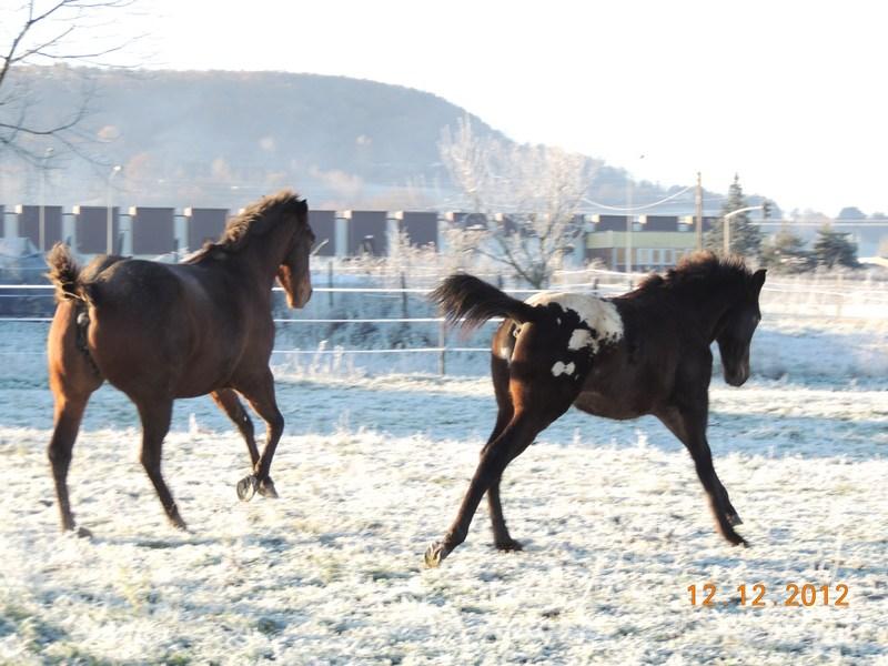 Mes chevaux, un mélange d'un peu tout le monde! - Page 3 12410