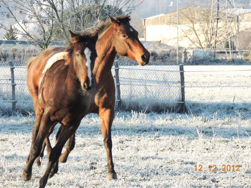 Mes chevaux, un mélange d'un peu tout le monde! - Page 3 12610