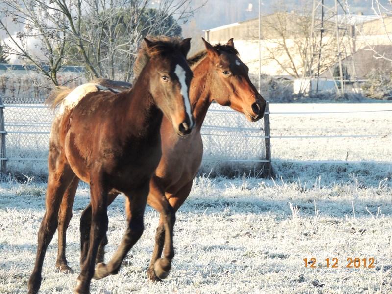 Mes chevaux, un mélange d'un peu tout le monde! - Page 3 12710
