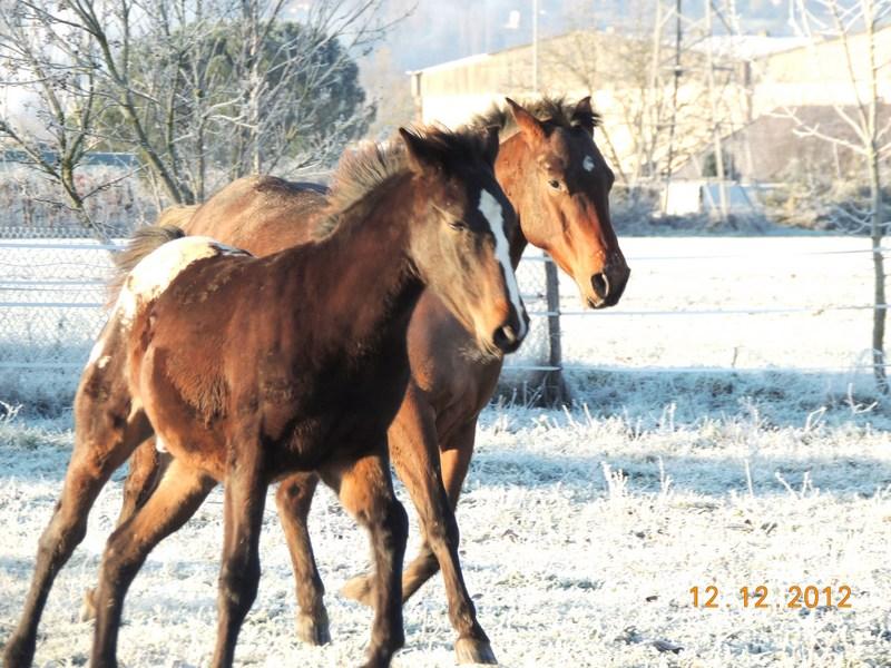 Mes chevaux, un mélange d'un peu tout le monde! - Page 3 12810