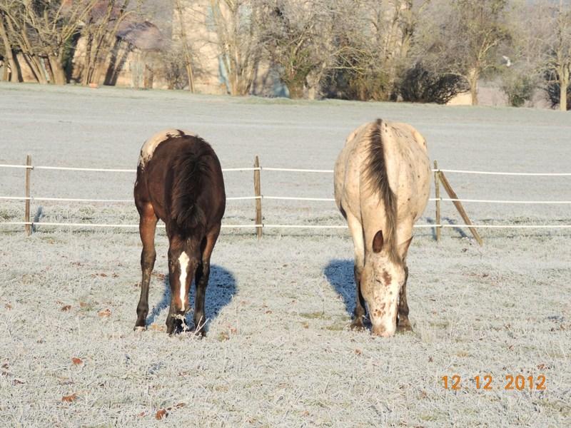 Mes chevaux, un mélange d'un peu tout le monde! - Page 3 14110