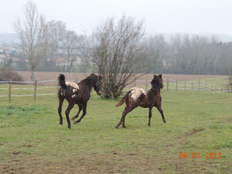 Mes chevaux, un mélange d'un peu tout le monde! - Page 4 Campbe14