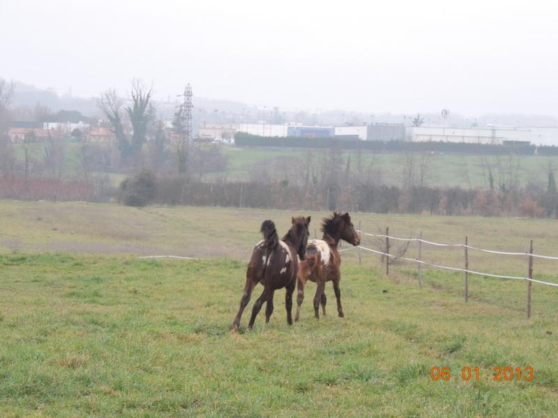 Mes chevaux, un mélange d'un peu tout le monde! - Page 4 Campbe15