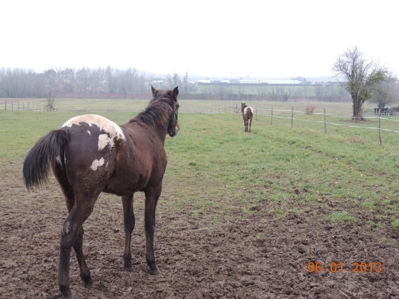 Mes chevaux, un mélange d'un peu tout le monde! - Page 4 Campbe16