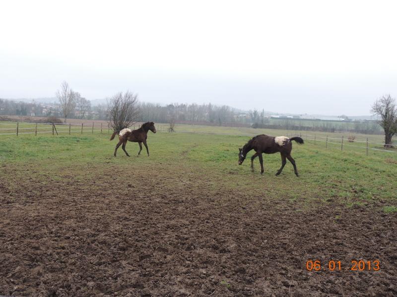 Mes chevaux, un mélange d'un peu tout le monde! - Page 4 Campbe17