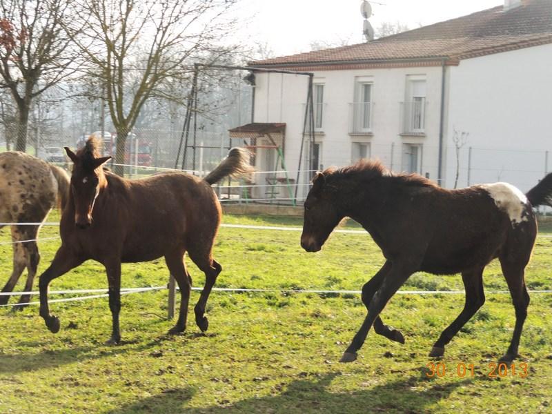 Mes chevaux, un mélange d'un peu tout le monde! - Page 5 Campbe33