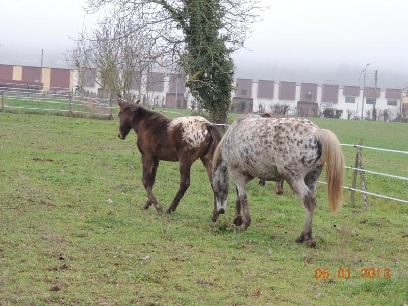 Mes chevaux, un mélange d'un peu tout le monde! - Page 4 Choomy21