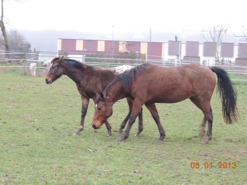 Mes chevaux, un mélange d'un peu tout le monde! - Page 4 Choomy22