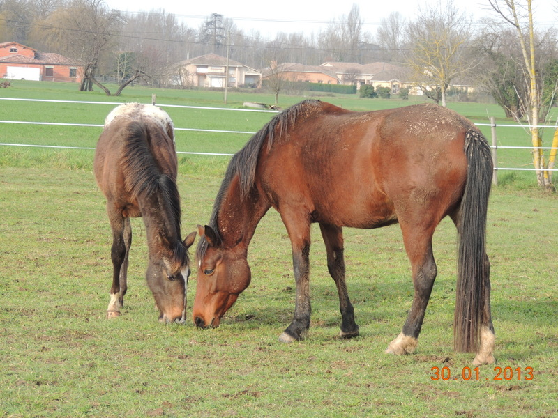 Mes chevaux, un mélange d'un peu tout le monde! - Page 5 Choomy34