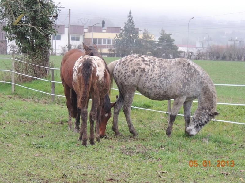 Mes chevaux, un mélange d'un peu tout le monde! - Page 4 Groupa10