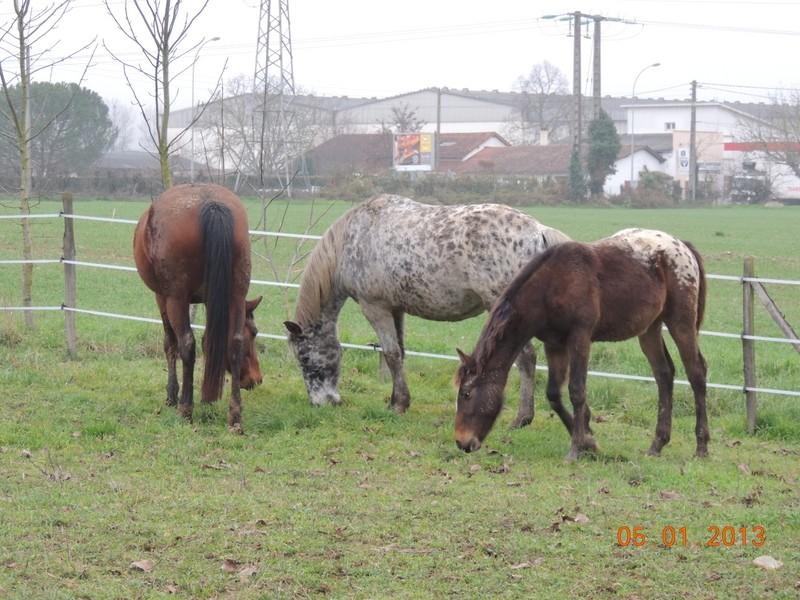 Mes chevaux, un mélange d'un peu tout le monde! - Page 4 Groupa11