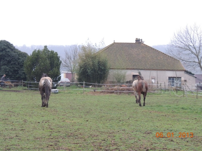 Mes chevaux, un mélange d'un peu tout le monde! - Page 4 Groupa15