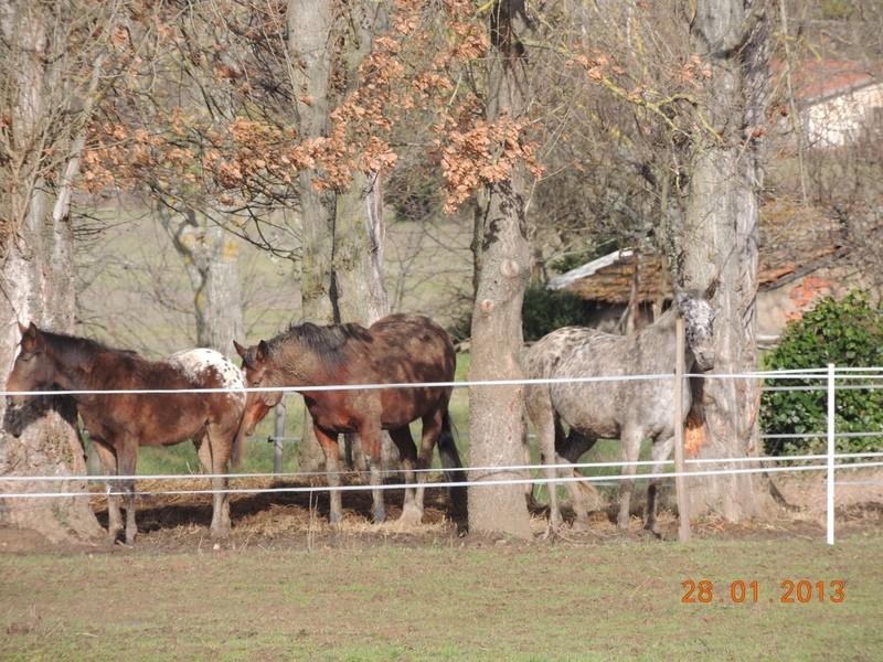 Mes chevaux, un mélange d'un peu tout le monde! - Page 5 Groupa16