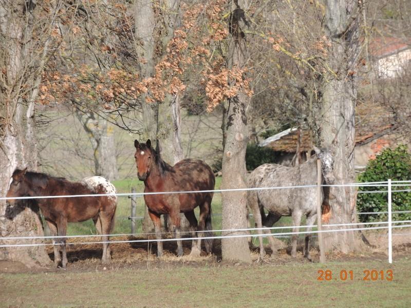 Mes chevaux, un mélange d'un peu tout le monde! - Page 5 Groupa17