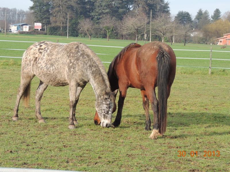 Mes chevaux, un mélange d'un peu tout le monde! - Page 5 Opium_14