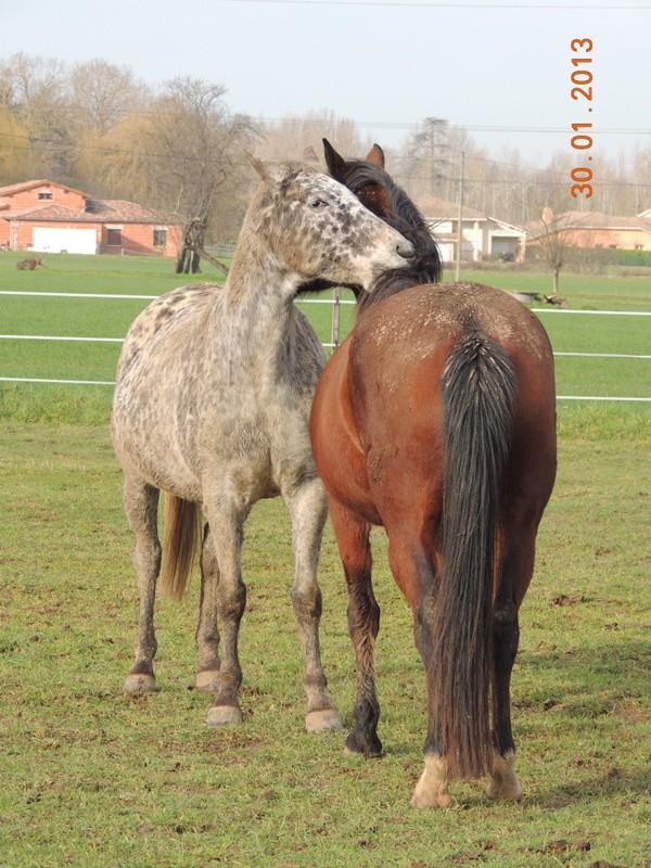 Mes chevaux, un mélange d'un peu tout le monde! - Page 5 Opium_15