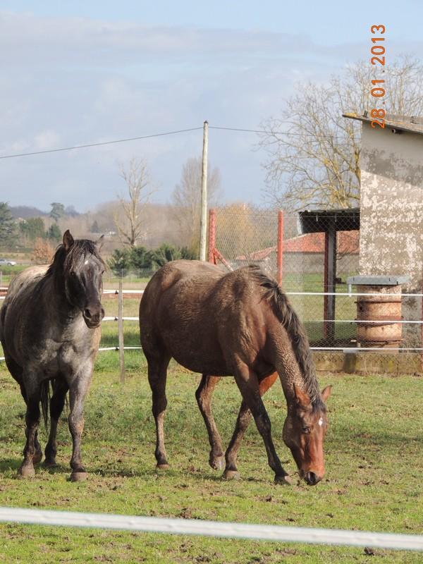 Mes chevaux, un mélange d'un peu tout le monde! - Page 5 Undy_e10