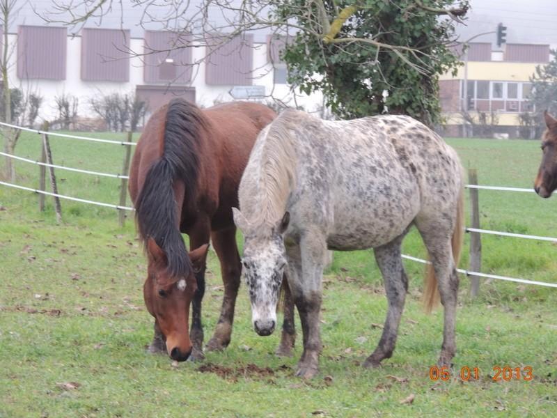 Mes chevaux, un mélange d'un peu tout le monde! - Page 4 Vinka_12