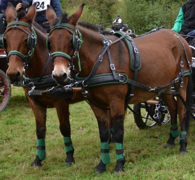 Mon projet d'attelage à 4 mules pas à pas ... Dsc_0010