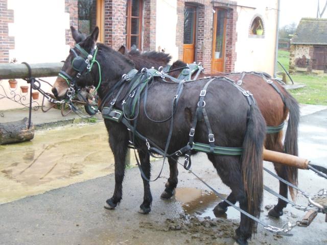 Mon projet d'attelage à 4 mules pas à pas ... Dscn1110